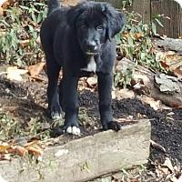 Adopt A Pet :: Colby - Byhalia, MS