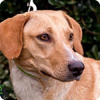 Adopt A Pet :: Gala - Savannah, GA