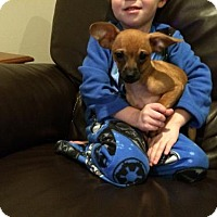 Adopt A Pet :: Garth (3 of 3) - Whitestone, NY