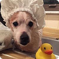 Adopt A Pet :: Mr Fitz - Georgetown, KY