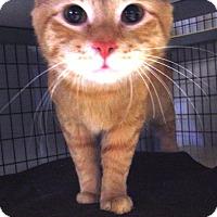 Adopt A Pet :: Bruce Wayne - Kalamazoo, MI