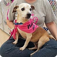 Adopt A Pet :: Sophie - Lafayette, LA
