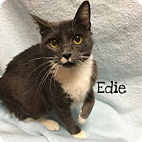Adopt A Pet :: Edie - Foothill Ranch, CA