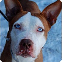 Adopt A Pet :: Lady - Long Beach, NY