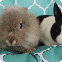 Adopt A Pet :: Brownie & Lollipop - Hillside, NJ