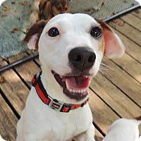 Adopt A Pet :: Rizzo (VA) - Virginia Beach, VA