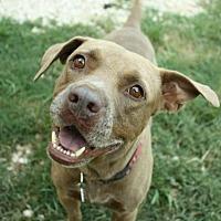 Adopt A Pet :: Sarge - Hankamer, TX