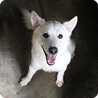 Adopt A Pet :: Pilot - Waco, TX