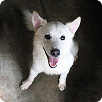 Retriever (Unknown Type) Mix Dog for adoption in Waco, Texas - Pilot