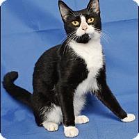 Adopt A Pet :: VIOLET - Gloucester, VA