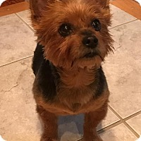 Adopt A Pet :: Zoe de Doe - Sinking Spring, PA