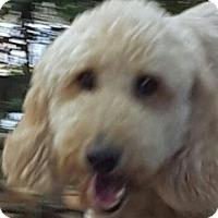 Adopt A Pet :: Sadie - Alpharetta, GA
