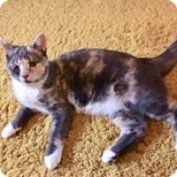 Calico Kitten for adoption in Colmar, Pennsylvania - Lexi