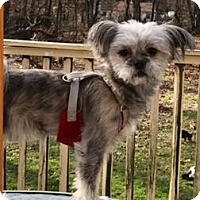 Adopt A Pet :: Tweedle Dee - Manhattan, NY