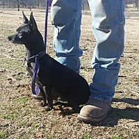 Adopt A Pet :: Huey - Tuttle, OK