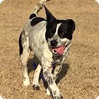 Adopt A Pet :: Mickey - Aiken, SC