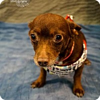 Adopt A Pet :: Poppy - Princeton, MN