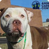 Adopt A Pet :: Leon - St. Louis, MO