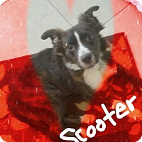 Adopt A Pet :: Scooter - Palm Bay, FL