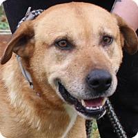 Adopt A Pet :: Beau - Hillsdale, IN