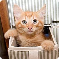 Adopt A Pet :: Randy - Irvine, CA
