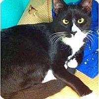 Adopt A Pet :: Handsome boy - Secaucus, NJ