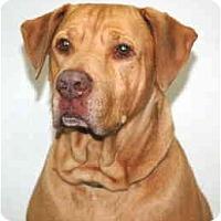 Adopt A Pet :: Red - Port Washington, NY