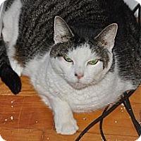 Adopt A Pet :: Fluffy - Binghamton, NY