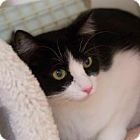 Adopt A Pet :: Aurora - Redondo Beach, CA