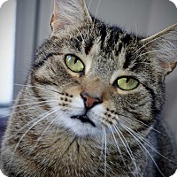 Adopt A Pet :: Lily - Xenia, OH