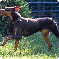 Adopt A Pet :: LANDON - Greensboro, NC