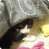Adopt A Pet :: Rica - Medina, OH