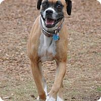 Adopt A Pet :: Buttons - Brentwood, TN
