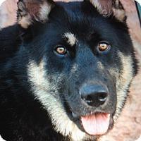 Adopt A Pet :: BUZZO VON BURK - Los Angeles, CA