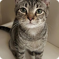 Adopt A Pet :: Oliver - Germantown, MD