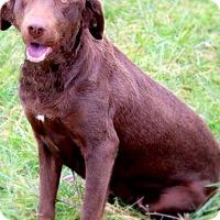 Adopt A Pet :: DIXIE(OUR