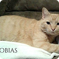 Adopt A Pet :: Tobias - Columbia, TN