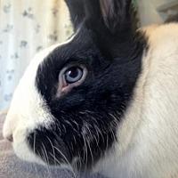 Adopt A Pet :: Kingston - Holbrook, NY