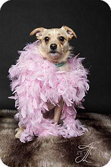 Terrier (Unknown Type, Medium) Mix Dog for adoption in Baton Rouge, Louisiana - Sasha