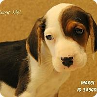 Adopt A Pet :: Malia - Camden, DE