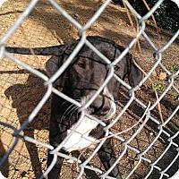 Adopt A Pet :: Camille - Camilla, GA