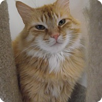 Adopt A Pet :: Mr. Dijon - Chambersburg, PA