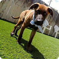 Adopt A Pet :: Keith - Austin, TX