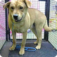 Adopt A Pet :: URGENT 9/29 @ DEVORE - San Bernardino, CA