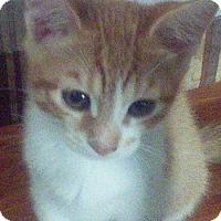 Adopt A Pet :: Pikachu - Alhambra, CA