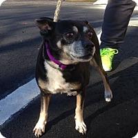 Adopt A Pet :: Buddy - Cashiers, NC