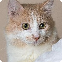 Adopt A Pet :: EVERRET - Pt. Richmond, CA