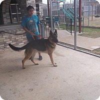Adopt A Pet :: Hagrit - San Antonio, TX