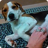 Adopt A Pet :: Buddy - Colton, CA