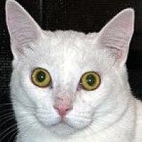 Adopt A Pet :: Sugar Pie - Auburn, CA